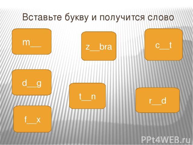 Вставьте букву и получится слово m__ z__bra c__t d__g t__n r__d f__x