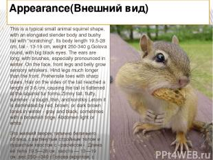 Appearance(Внешний вид) This is a typical small animal squirrel shape, with an e
