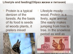 Lifestyle and feeding(Образ жизни и питания) Protein is a typical denizen of the
