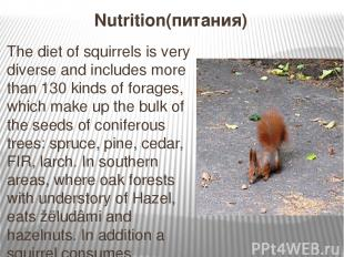 Nutrition(питания) The diet of squirrels is very diverse and includes more than