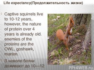 Life expectancy(Продолжительность жизни) Captive squirrels live to 10-12 years,