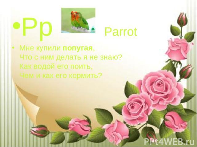 Pp Parrot Мне купилипопугая, Что с ним делать я не знаю? Как водой его поить, Чем и как его кормить?