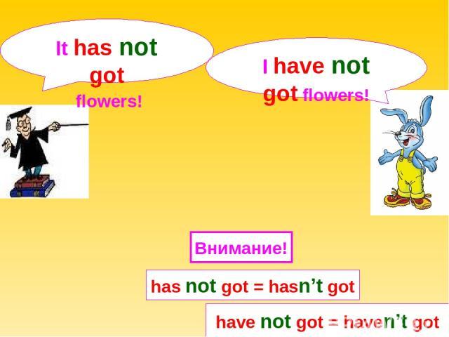 I have not got flowers! It has not got flowers! have not got = haven't got Внимание! has not got = hasn't got