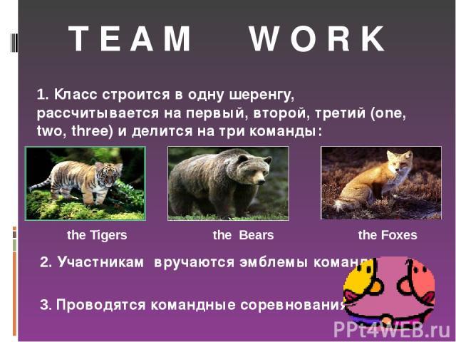 T E A M W O R K 1. Класс строится в одну шеренгу, рассчитывается на первый, второй, третий (one, two, three) и делится на три команды: 3. Проводятся командные соревнования. 2. Участникам вручаются эмблемы команды. the Tigers the Bears the Foxes
