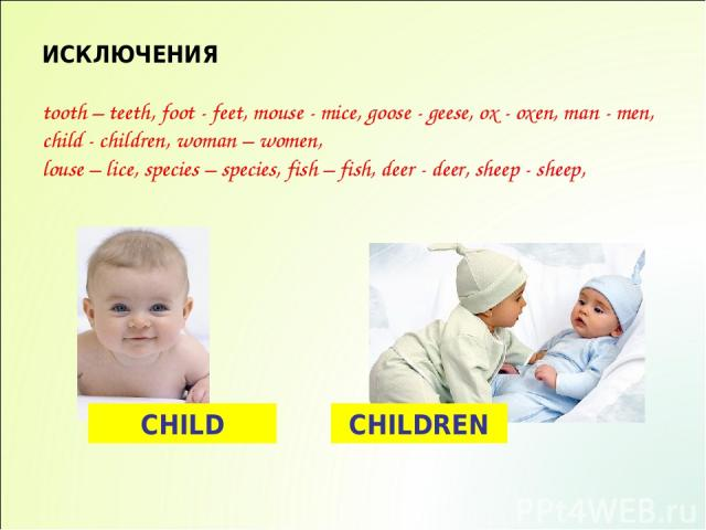ИСКЛЮЧЕНИЯ tooth – teeth, foot - feet, mouse - mice, goose - geese, ox - oxen, man - men, child - children, woman – women, louse – lice, species – species, fish – fish, deer - deer, sheep - sheep, CHILD CHILDREN