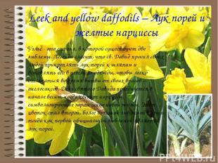 Leek and yellow daffodils – Лук порей и желтые нарциссы Уэльс - это страна, в ко