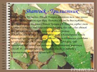 Shamrock - Трилистник Покровитель Ирландии Святой Патрик знаменит тем, что прине