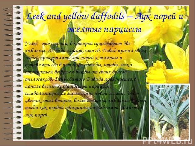 Leek and yellow daffodils – Лук порей и желтые нарциссы Уэльс - это страна, в которой существуют две эмблемы. Легенда гласит, что св. Давид просил своих людей прикреплять лук-порей к шляпам и вставлять его в петлицы одежды, чтобы легко отличаться во…