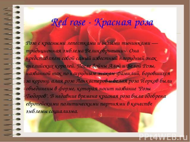 Red rose - Красная роза Роза с красными лепестками и белыми тычинками — традиционная эмблема Великобритании. Она представляет собой самый известный нагрудный знак английских королей. После войны Алой и Белой Розы, названной так по нагрудным знакам ф…