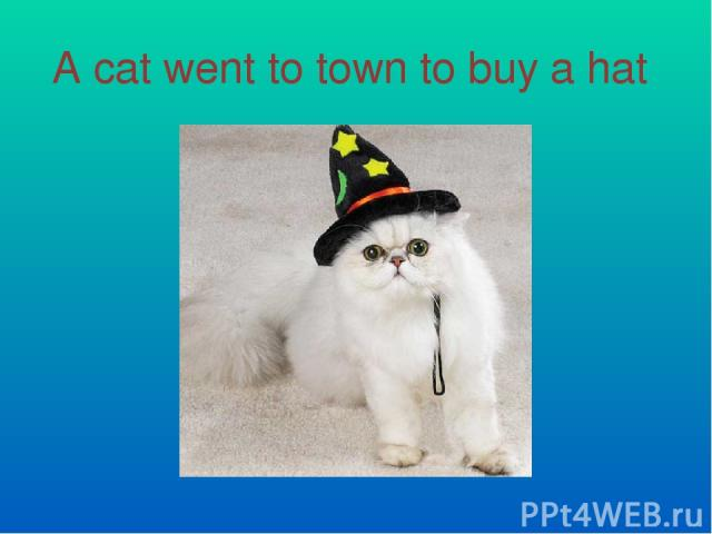 A cat went to town to buy a hat