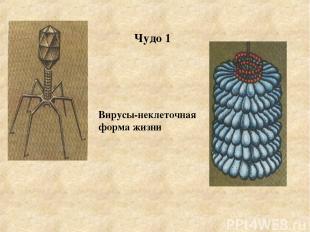 Чудо 1 Вирусы-неклеточная форма жизни