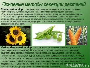 Массовый отбор - применяют при селекции перекрестноопыляемых растений, таких, ка