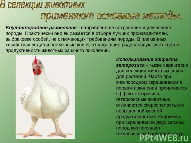 Гетерозис на украинском языке