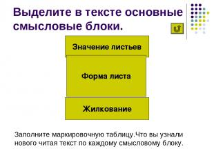 Выделите в тексте основные смысловые блоки. Значение листьев Жилкование Форма ли