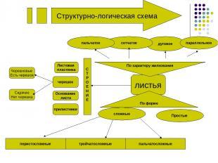 Структурно-логическая схема листья дуговое Простые По форме параллельное сложные