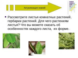 Актуализация знаний Рассмотрите листья комнатных растений, гербарии растений. Дл