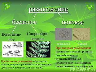 бесполое размножение половое Вегетатив-ное Спорообра-зование яйцеклетка спермий
