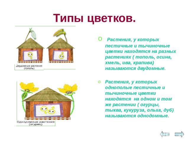 Типы цветков. Растения, у которых пестичные и тычиночные цветки находятся на разных растениях ( тополь, осина, хмель, ива, крапива) называются двудомные. Растения, у которых однополые пестичные и тычиночные цветки находятся на одном и том же растени…