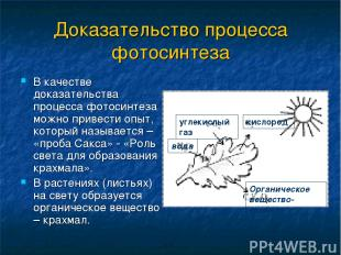 Доказательство процесса фотосинтеза В качестве доказательства процесса фотосинте