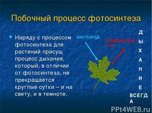 Побочный процесс фотосинтеза Наряду с процессом фотосинтеза для растений присущ