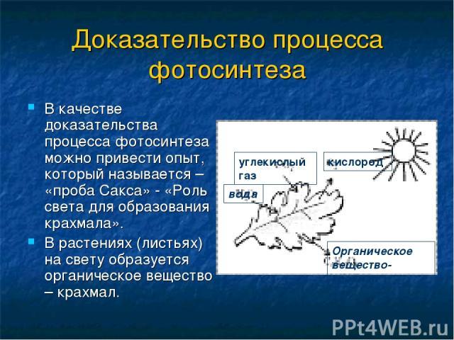 Доказательство процесса фотосинтеза В качестве доказательства процесса фотосинтеза можно привести опыт, который называется – «проба Сакса» - «Роль света для образования крахмала». В растениях (листьях) на свету образуется органическое вещество – кра…
