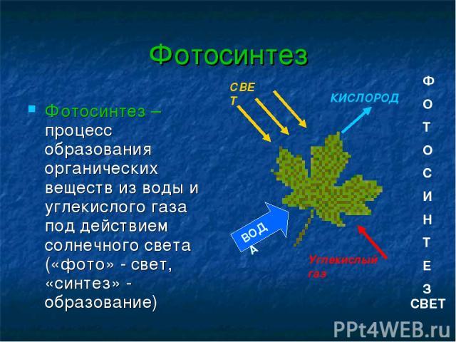 Фотосинтез Фотосинтез – процесс образования органических веществ из воды и углекислого газа под действием солнечного света («фото» - свет, «синтез» - образование) КИСЛОРОД Углекислый газ СВЕТ ВОДА Ф О Т О С И Н Т Е З СВЕТ