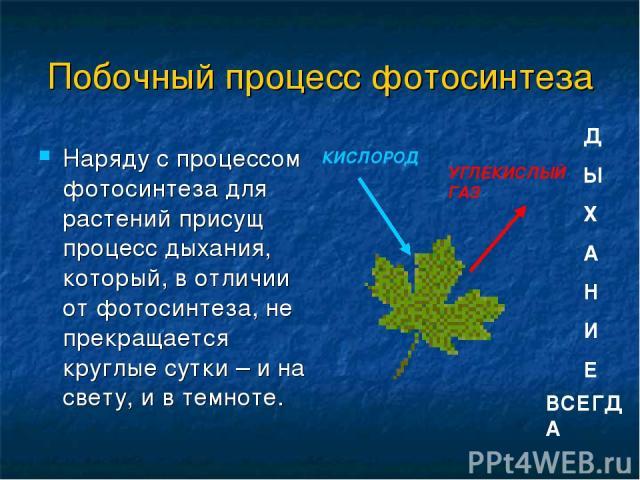 Побочный процесс фотосинтеза Наряду с процессом фотосинтеза для растений присущ процесс дыхания, который, в отличии от фотосинтеза, не прекращается круглые сутки – и на свету, и в темноте. КИСЛОРОД УГЛЕКИСЛЫЙ ГАЗ ВСЕГДА Д Ы Х А Н И Е