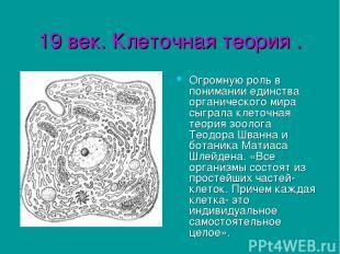 19 век. Клеточная теория . Огромную роль в понимании единства органического мира