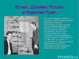 20 век. Джеймс Уотсон и Френсис Крик. Согласно модели Крика – Уотсона, ДНК предс