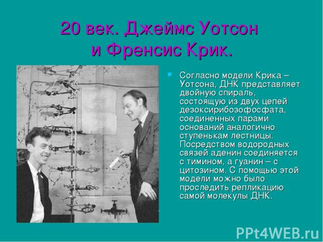 20 век. Джеймс Уотсон и Френсис Крик. Согласно модели Крика – Уотсона, ДНК представляет двойную спираль, состоящую из двух цепей дезоксирибозофосфата, соединенных парами оснований аналогично ступенькам лестницы. Посредством водородных связей аденин …