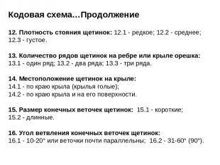 Кодовая схема…Продолжение 12. Плотность стояния щетинок: 12.1 - редкое; 12.2 - с