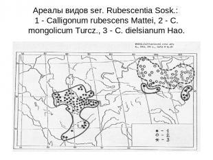 Ареалы видов ser. Rubescentia Sosk.: 1 - Calligonum rubescens Mattei, 2 - C. mon