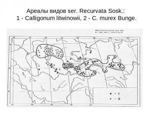 Ареалы видов ser. Recurvata Sosk.: 1 - Calligonum litwinowii, 2 - C. murex Bunge