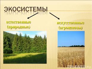 естественные (природные) искусственные (агроценозы)