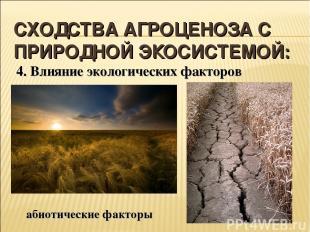 СХОДСТВА АГРОЦЕНОЗА С ПРИРОДНОЙ ЭКОСИСТЕМОЙ: 4. Влияние экологических факторов а