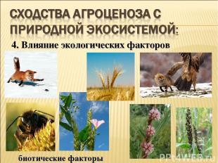 4. Влияние экологических факторов биотические факторы
