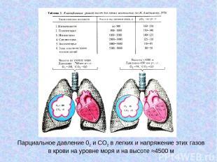 Парциальное давление 02 и СО2 в легких и напряжение этих газов в крови на уровне
