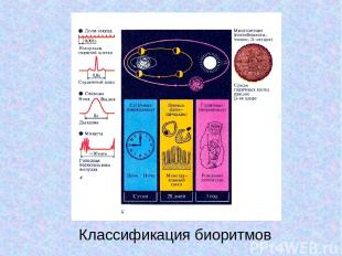 Классификация биоритмов