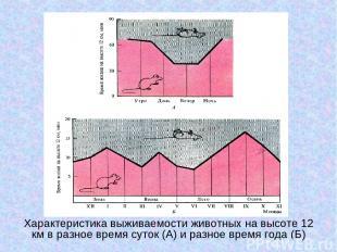 Характеристика выживаемости животных на высоте 12 км в разное время суток (А) и