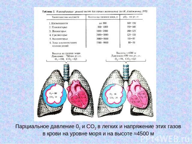 Парциальное давление 02 и СО2 в легких и напряжение этих газов в крови на уровне моря и на высоте ≈4500 м