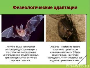 Физиологические адаптации Летучие мыши используют эхолокацию для ориентации в пр