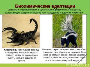 Биохимические адаптации связаны с образованием в организме определенных веществ,