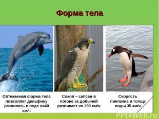 Форма тела Обтекаемая форма тела позволяет дельфину развивать в воде v=40 км/ч С