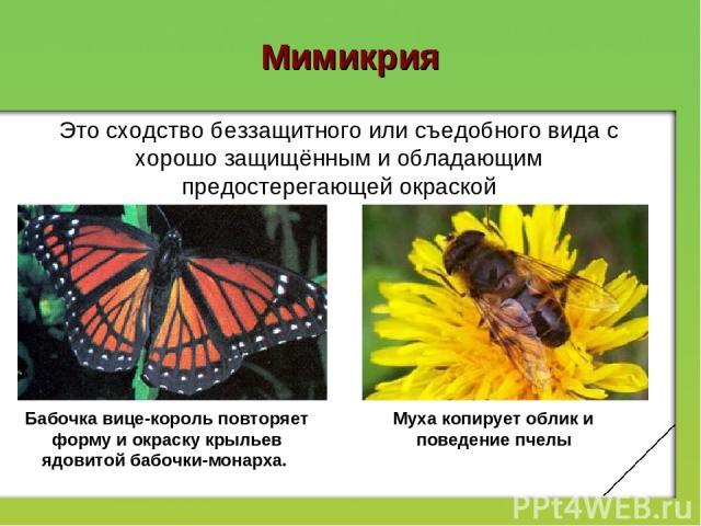 Мимикрия Бабочка вице-король повторяет форму и окраску крыльев ядовитой бабочки-монарха. Муха копирует облик и поведение пчелы Это сходство беззащитного или съедобного вида с хорошо защищённым и обладающим предостерегающей окраской