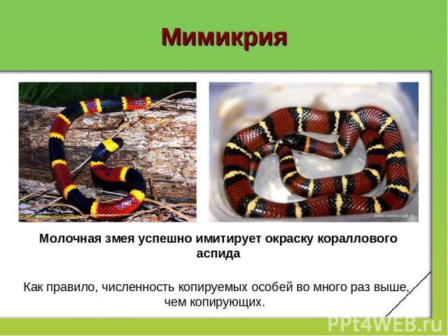 Мимикрия Молочная змея успешно имитирует окраску кораллового аспида Как правило, численность копируемых особей вомного раз выше, чем копирующих.