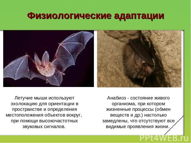 Физиологические адаптации Летучие мыши используют эхолокацию для ориентации в пространстве и определения местоположения объектов вокруг, при помощи высокочастотных звуковых сигналов. Анабиоз - состояние живого организма, при котором жизненные процес…