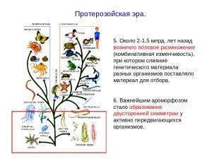 5. Около 2-1,5 млрд. лет назад возникло половое размножение (комбинативная измен