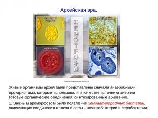 Живые организмы архея были представлены сначала анаэробными прокариотами, которы