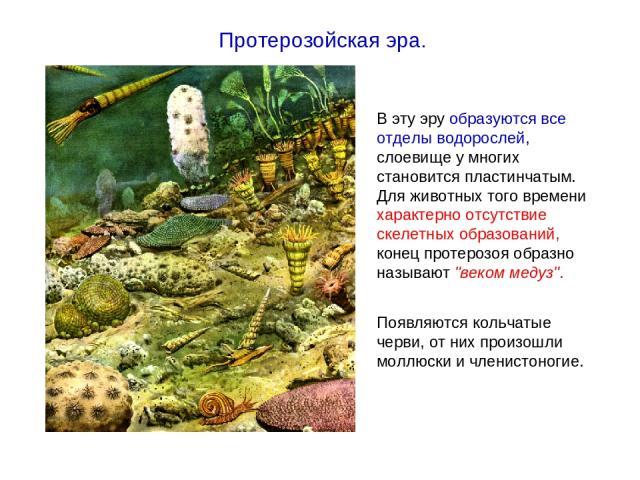 В эту эру образуются все отделы водорослей, слоевище у многих становится пластинчатым. Для животных того времени характерно отсутствие скелетных образований, конец протерозоя образно называют