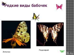 Редкие виды бабочек Подалирий Апполон
